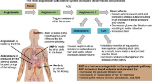 explanation of blood volume and pressure process
